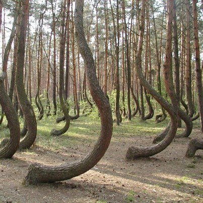 curious forest